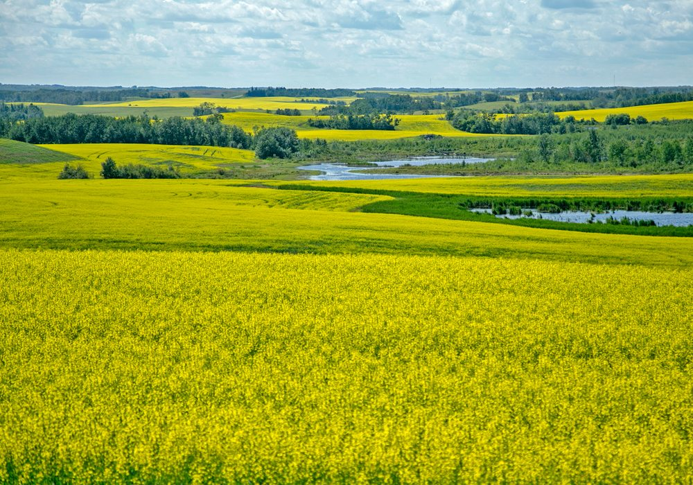 AiM Land Environmental Planning