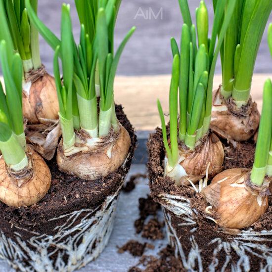 Tips-for-Spring-Gardening-in-Alberta